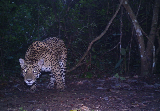 Saving the Serranía de San Lucas, a vital link in the 'jaguar corridor' – Mongabay