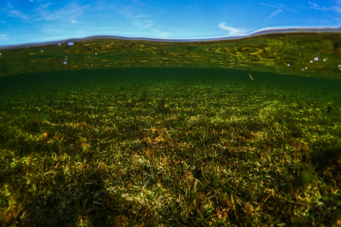 Indonesians plant trees to nurse seagrass back to health in Wakatobi – Mongabay