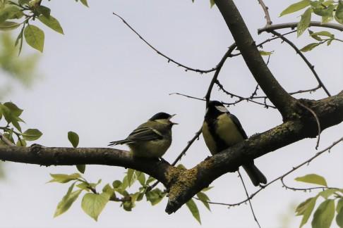 BirdosJP